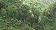 002-Costa-Rica-Dschungel-1