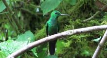 004-Costa-Rica-Kolibri-1