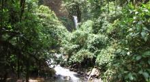 008-Costa-Rica-Dschungel-2