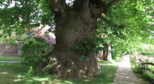 010-England-alter-Baum