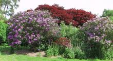 011-England-Garten-1