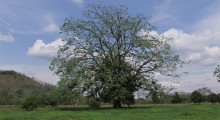 012-Costa-Rica-Baum-1