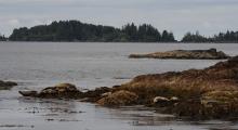 016-Kanada-Vancouver-Island-Robben-1
