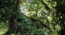 021-Costa-Rica-Dschungel-3