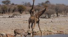 022-Namibia-Etoscha-Wasserloch