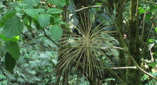 023-Costa-Rica-Dschungel-5