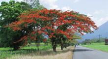 024-Costa-Rica-Baum-2