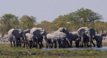 024-Namibia-Etoscha-Elefantenherde
