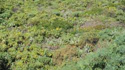 025-La Palma-Pflanzen-1