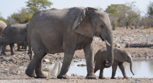 025-Namibia-Elefantenkuh