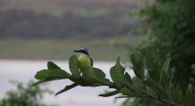 029-Costa-Rica-Vogel-1