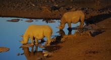 030-Namibia-Etoscha-Nashoerner