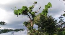 031-Costa-Rica-Dschungel-6