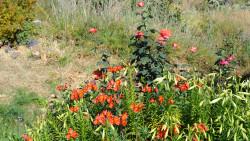 031-La Palma-Blumen
