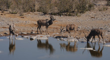 031-Namibia-Etoscha-Wasserloch-Antilopen