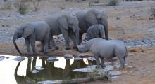032-Namibia-Etoscha-Wasserloch-Elefanten