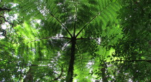 034-Costa-Rica-Dschungel-7