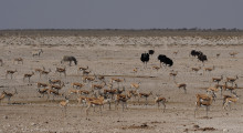 034-Namibia-Tierbeobachtung-1
