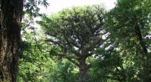 035-Costa-Rica-Dschungel-8
