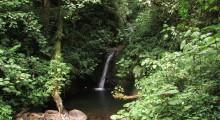 036-Costa-Rica-Dschungel-9