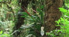 037-Costa-Rica-Dschungel-10