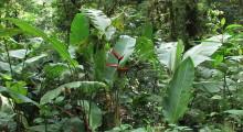 039-Costa-Rica-Dschungel-12