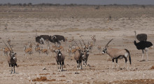 039-Namibia-Tierbeobachtung-2