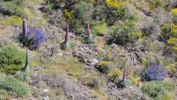 043-La Palma-Pflanzen-3