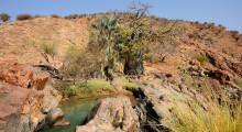 045-Namibia-Baobab