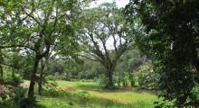 070-Costa-Rica-Baum-2