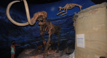 070-Kanada-Alberta-Mammut
