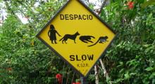 071-Costa-Rica-Verkehrsvorschriften-1