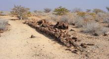 083-Namibia-Versteinerter Wald-1