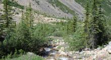 087-Kanada-Jasper-Mount-Edith-Bach