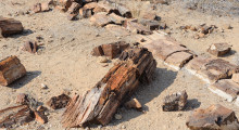 088-Namibia-Khorixas-Versteinerter Wald