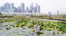 102-Singapur-City-23