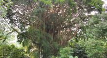 107-Singapur-Botanischer-Garten-1