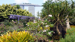 109-Singapur-Gardens-by-the-Bay-2