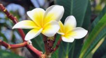 111-Singapur-Blumen-2