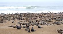 113-Namibia-Robbenkolonie-Cape-Cross-1