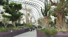 114-Singapur-Gardens-by-the-Bay-5