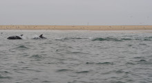 122-Namibia-Walvis-Bay-Delfinbeobachtung-1