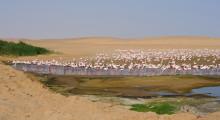 127-Namibia-Walvis-Bay-Flamingos-1