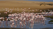 128-Namibia-Walvis-Bay-Flamingos-2